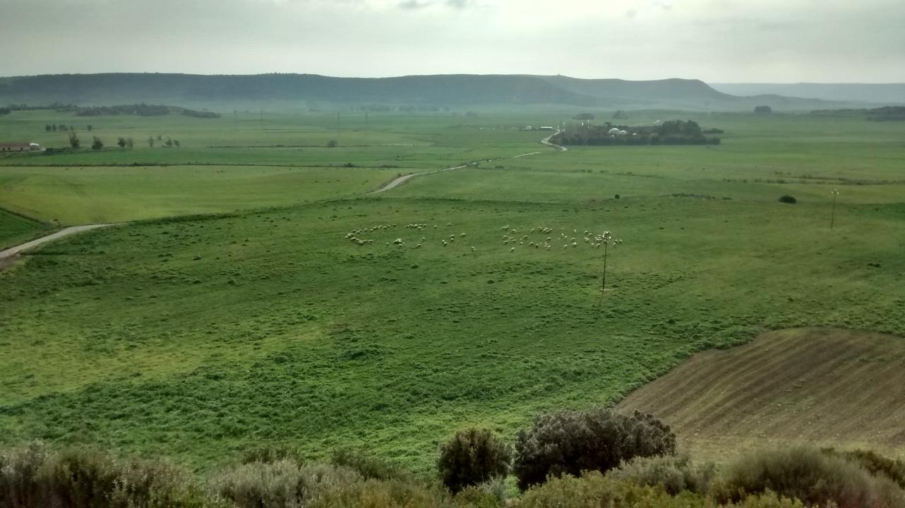 Scotland or Sardinia? Sheep grazing in the countryside